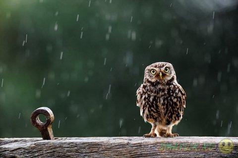 Милые совы