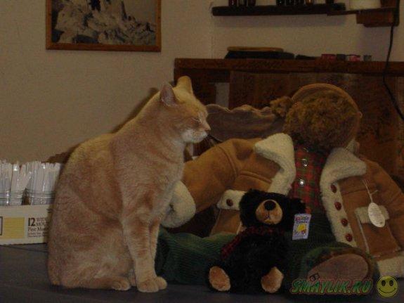 Рыжий кот-мэр Стаббс выписан из ветеринарной клиники