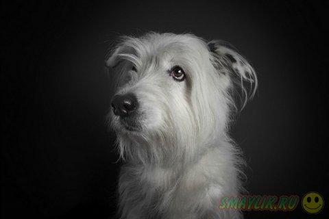 Портреты собак от Ральфа Хагартена