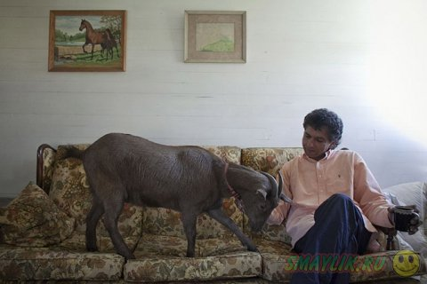 Не совсем обычные домашние животные
