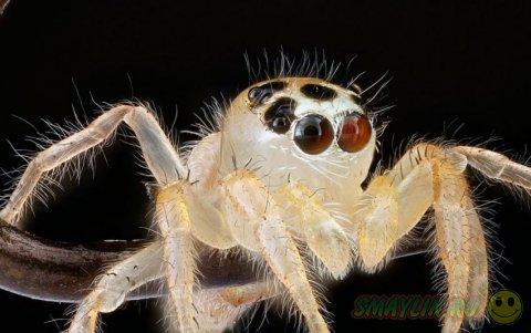 Снимки насекомых снятых крупным планом