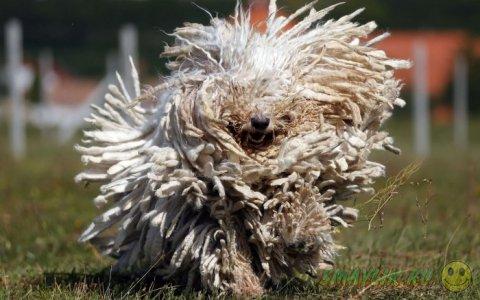 Подборка удачных фотографий животных