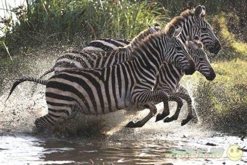 Фотографии животных со всего мира