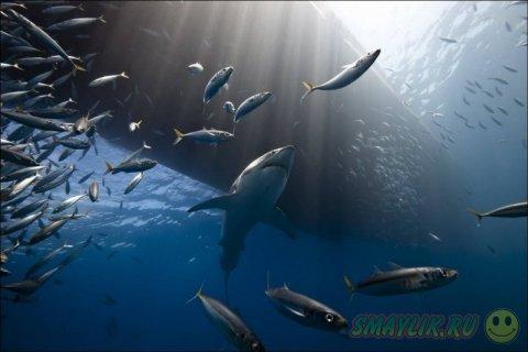 Лучшие фотографии National Geographic 2013