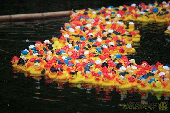 В Висконсине легализованы соревнования резиновых уток