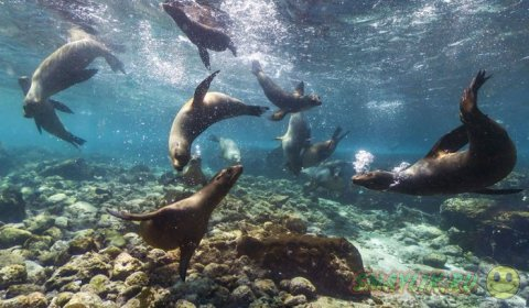 Уникальная жизнь Национального парка Галапагосских островов