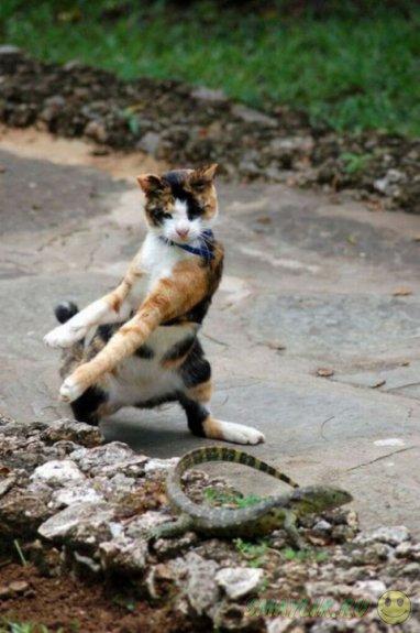 Фотографии домашних котов, сделанные в нужный момент