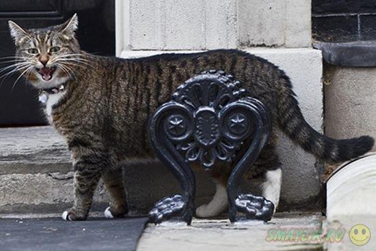 Премьер-министра Британии Дэвида Кэмерона обвинили в нелюбви к своему коту