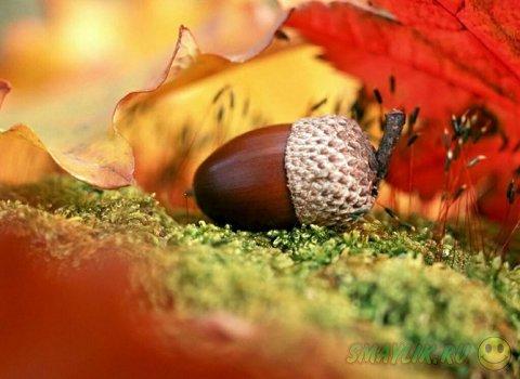 Золотые краски осени