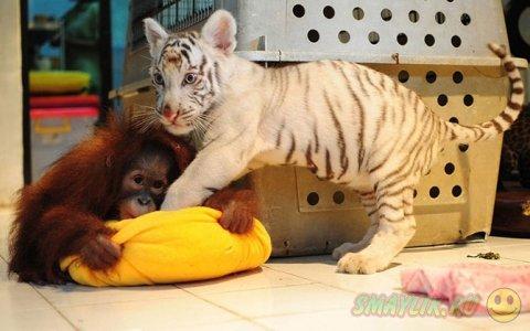 Забавные и необычные фотографии животных