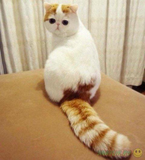 Кошка Снупи