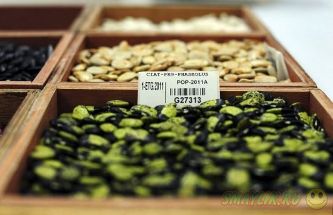 Огромное хранилище семян в Норвегии