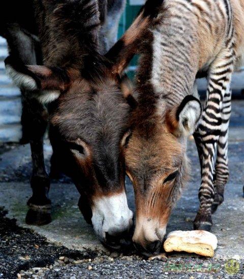 Мир животных в фотографиях