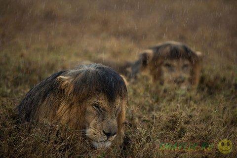 Работы победившие в конкурсе Wildlife Photograher of the Year 2013