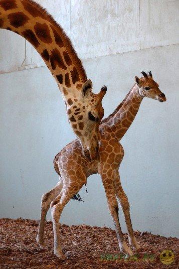 Забавные фотографии животных за неделю