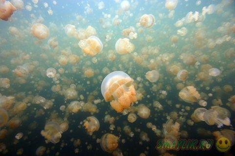 Жизнь подводного мира