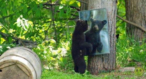 Семейство черных медведей в парке Преск Айл