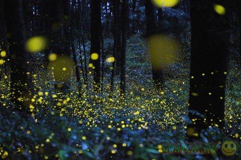 Светлячки в ночном лесу