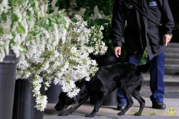 В  графстве Ноттингемпшир престарелым полицейским собакам будут выплачивать пенсию