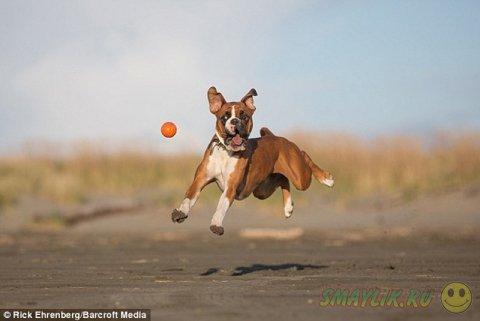 Чарли и его любимый оранжевый мячик