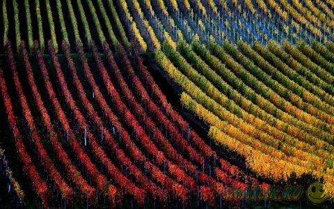Осень —  красивое время года