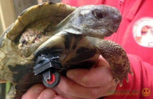 В немецком ветеринарном центре соорудили протез для черепахи