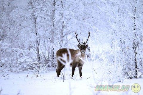 Фотографии животных с разных уголков мира
