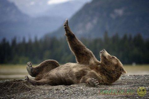 Самые яркие фотографии животных за неделю