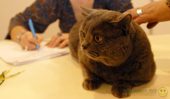 Российские МЧСники спасли упитанного кота из вентиляционной шахты
