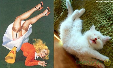 Забавные фотографии кошек и девушек в стиле пинап