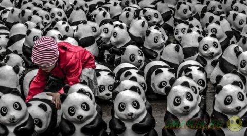 Самые яркие работы участников конкурса  «National Geographic Photography Contest 2013»