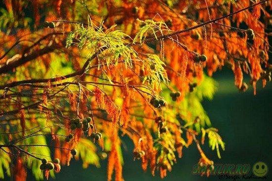 Уходящая осень