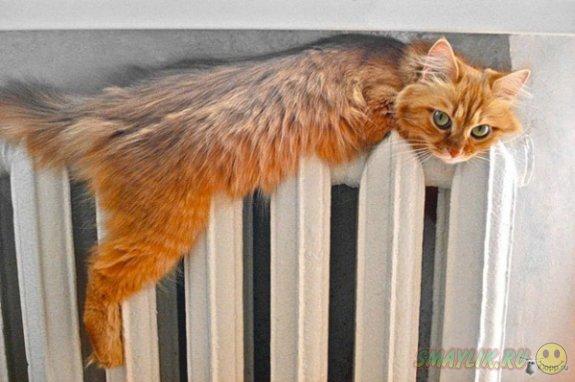 Рыжие коты – счастье в доме...