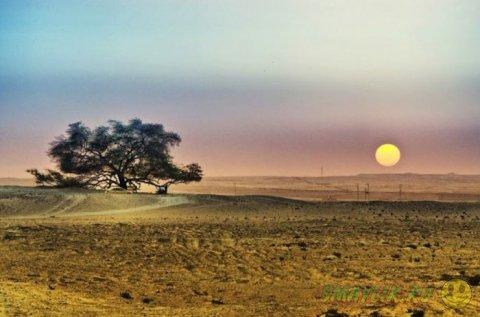 Дерево-легенда посреди пустыни в Бахрейне