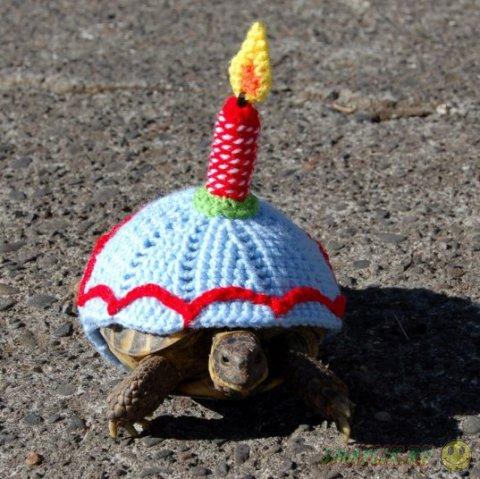 Шерстяные наряды для черепах