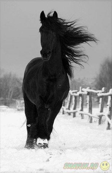 Лошади - это лучшее, что дала нам природа