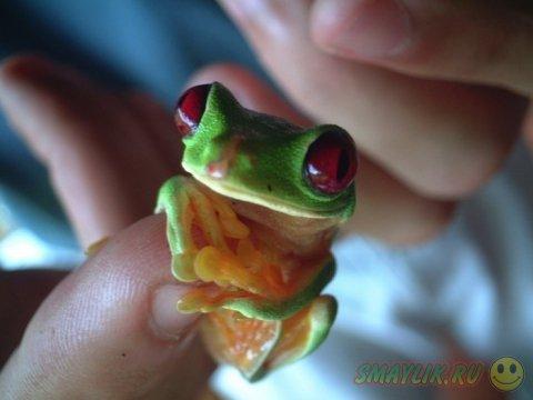 Животные, помещающиеся на подушечке человеческого пальца
