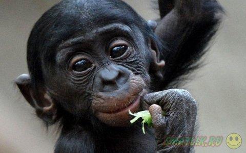 Позитив из мира животных