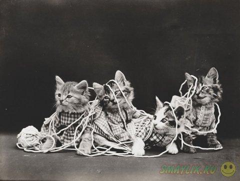 Первые веселые фотографии кошек -  LOLcat