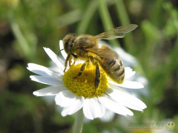 Животные — биосиноптики от природы