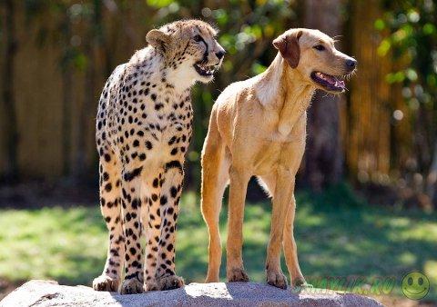 Необычная зверей в зоопарке Сан-Диего