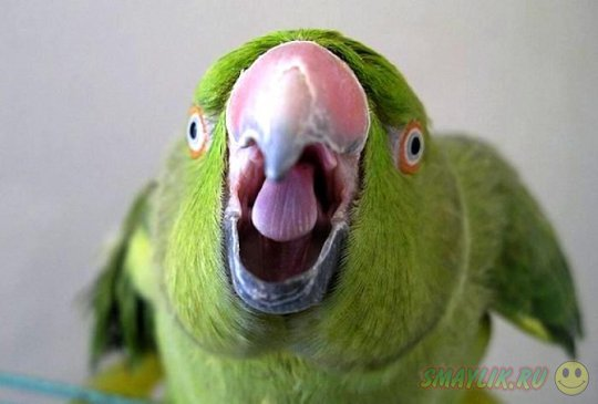 В мексиканской столице попугай сдал полицейским пяного водителя