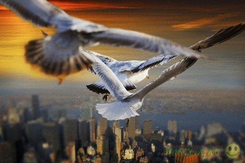 Птицы, парящие высоко в небе