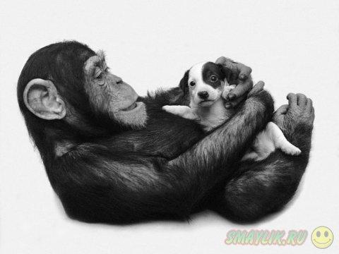 Когда животные опекают чужих детенышей