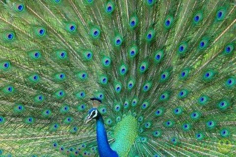 Позитив в  подборке фотографий животных