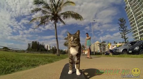 Кататься на скейтборде могут и кошки