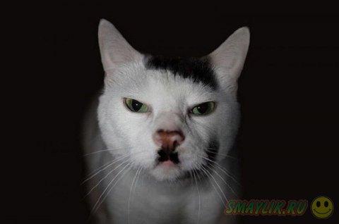 Симпатичные усы у животных
