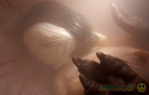 Детеныши животных до рождения
