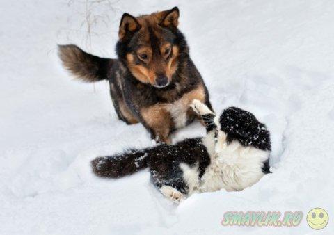 Кошки и собаки - две противоборствующие стороны