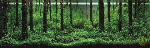 Идеи подводного ландшафта в аквариуме
